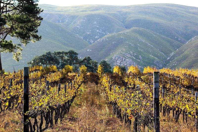 Organic wine Famille Perrin